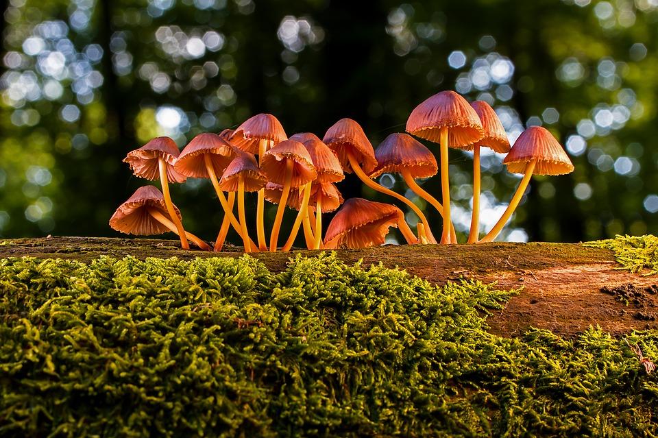 Où trouver des champignons en Lozère ?
