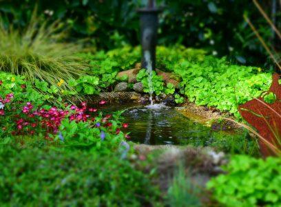 Pourquoi avoir un bassin de jardin ?